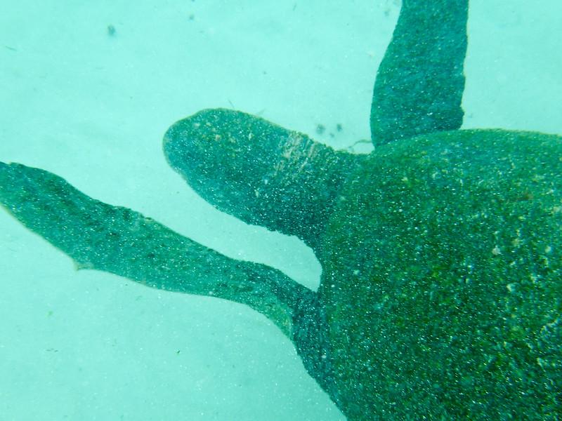 underwater-62.jpg