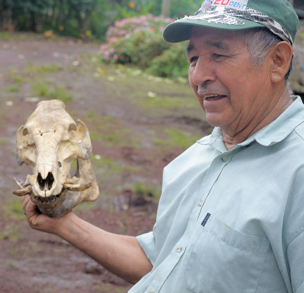 The owner of the plantation shows us the skull of a boar that attacked him in the cane fields.  The crease across its forehead is from his machete.  Unfortunately, he has some scars from the encounter as well.
