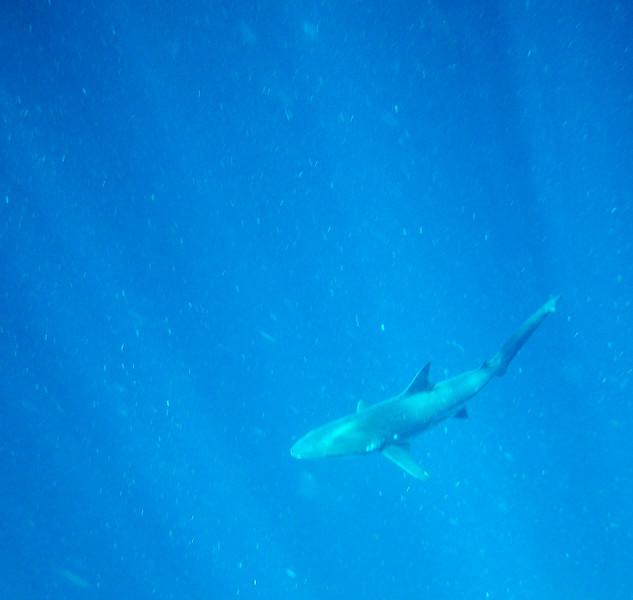 underwater-91.jpg