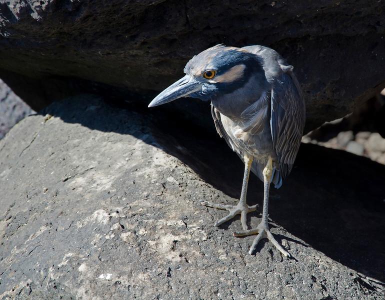 Galapagos-59.jpg