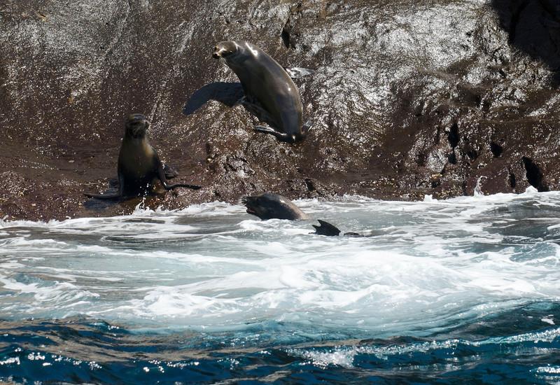 Galapagos-75-2.jpg