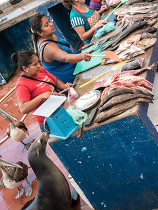 Unwelcomed Customers at the fish market in Puerto Ayora.