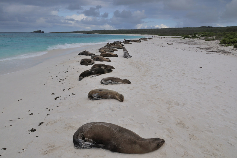 Over-crowded beaches Galapagos style, Gardner Bay.
