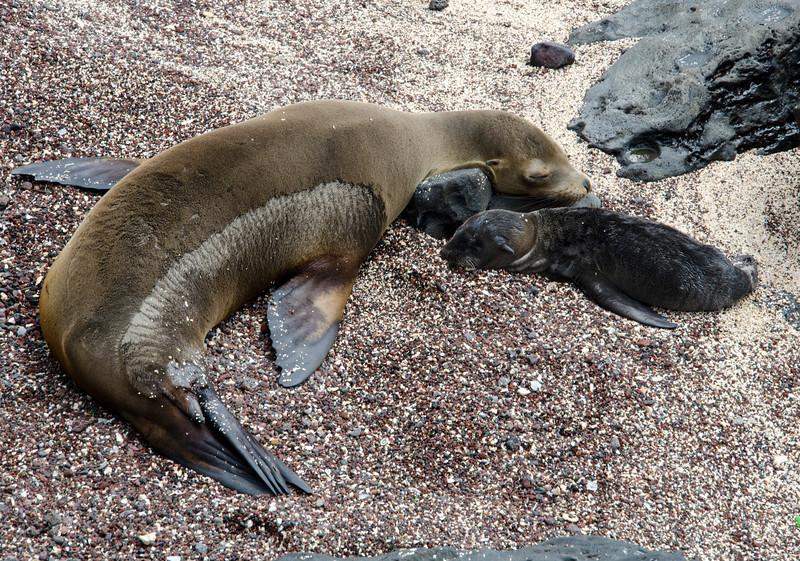 Galapagos-15-2.jpg