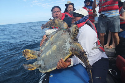 saving a green sea turtle from all the plastic wrapped around his neck and arms
