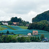 A village along the lake Lucern with a vineyard.