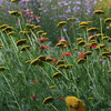 Yampa River Botanic Gardens - Steamboat Springs