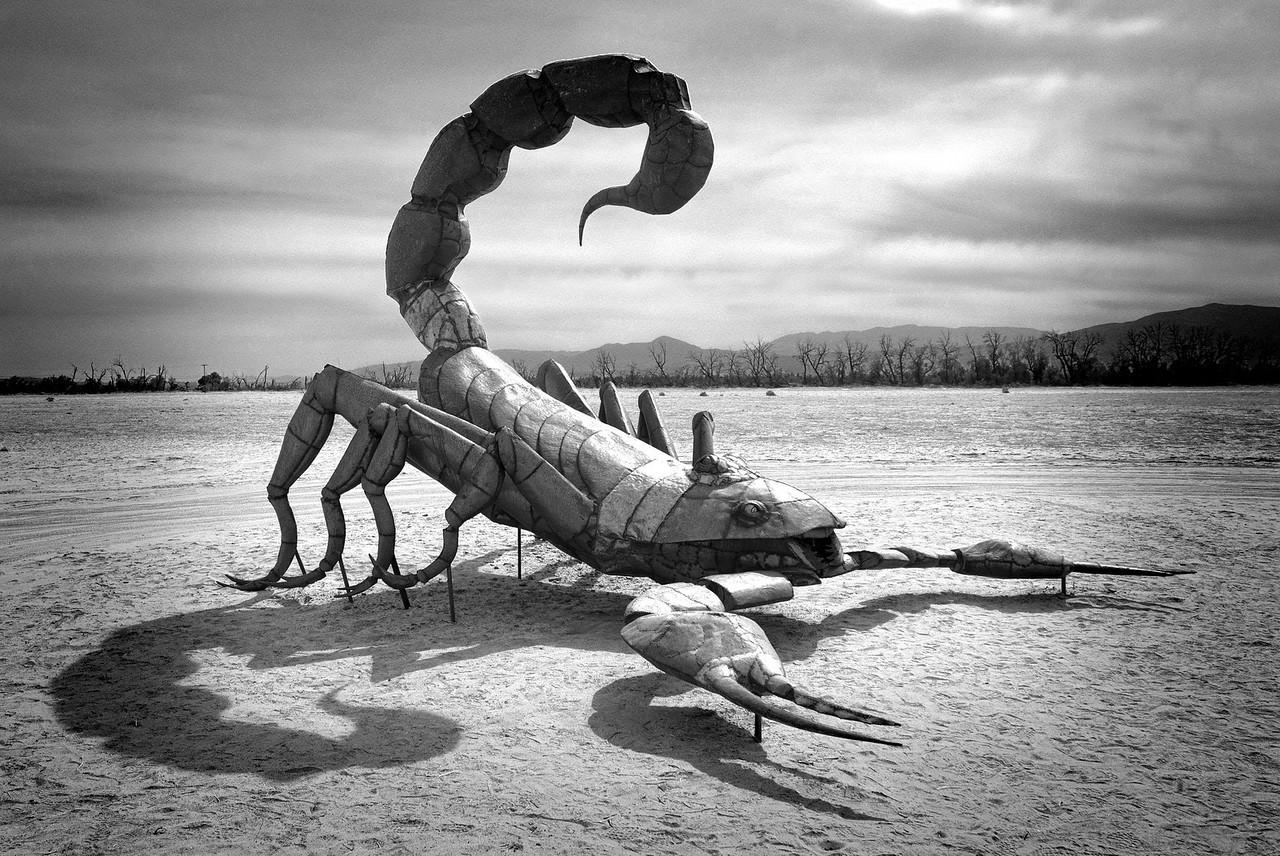Untitled_HDR2 scorpion