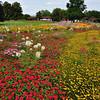 Gardens of Killesberg Park - Stuttgart.<br /> <br /> (picture taken July 12, 2009)