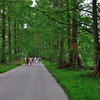 Metasequoia Avenue in the gardens on Mainau Island.<br /> <br /> picture taken July 13, 2009