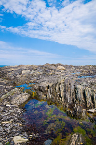 These rocks are between low and high tide line... lots of little (sometimes smelly) pools with various tidal flora