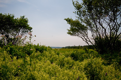 Looking through the trees toward an inlet