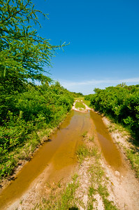 I followed this little dirt road on foot until it got a bit too wet.