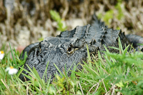 ~I hate Paparazzi~<br /> <br /> Possibly be eaten by gator or get the shot:  get the shot!