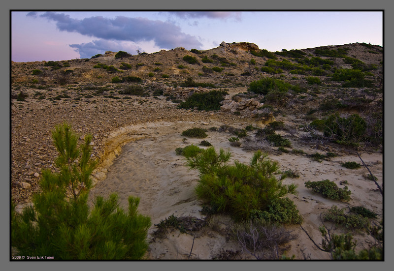 Clay, sand, small rocks - and pine bushes
