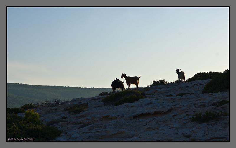 Pastoral evening scene