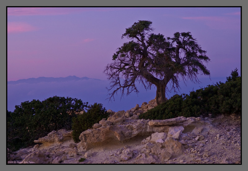 An old cyprus tree on the hilltop - overlooking Crete