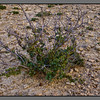 Gorund structure - juniper in barren environment