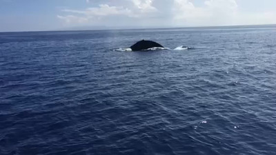 Gemini Whales 2015 Video by Mark