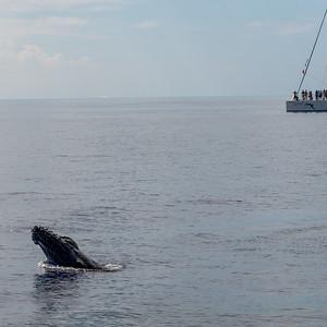 Gemini Whales 2015