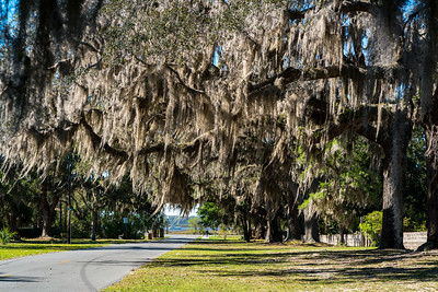 Live Oak facing St. Marys River