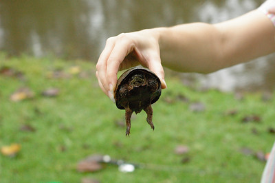 Turtle caught while fishing