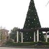 Christmas Tree - Ashley Park Mall Drive-Through