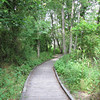 Boardwalk Trails - Phinizy Swamp Nature Park - Augusta, GA