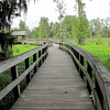 Wetlands Walkway - Phinizy Swamp Nature Park - Augusta, GA