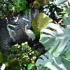Heron Statuary - State Botanical Garden of Georgia - Athens, GA  2/10/13