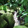 Hidden Cherub by a Stream - State Botanical Garden of Georgia - Athens, GA  2/10/13