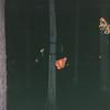 Butterflies - Night Train Ride Through Christmas Lights - Callaway Gardens, Pine Mountain, GA  12-25-96