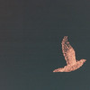 Bird - Night Train Ride Through Christmas Lights - Callaway Gardens, Pine Mountain, GA  12-25-96