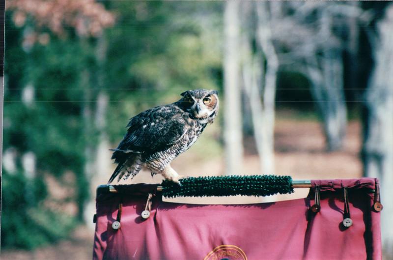 Horned Owl - Callaway Gardens - Pine Mountian, GA  12-8-01