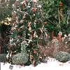 Decorated Tree - Callaway Gardens, Pine Mountain, GA  12-25-96