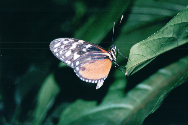 Butterfly House - Callaway Gardens - Pine Mountian, GA  12-8-01