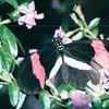 Butterfly - Callaway Gardens - Pine Mountian, GA  12-8-01
