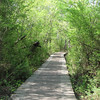 Wetland Trail - Chattahoochee Nature Center, Roswell, GA