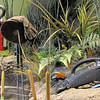 Trash From the River Recycled Into Sculptures and Habitat Settings - Chattahoochee Nature Center, Roswell, GA