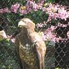 Chattahoochee Nature Center, Roswell, GA