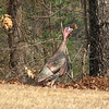 Turkey Says Bye Bye Till Next Time - Visiting Robin Sockness in Fayetteville