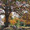 Autumn Colors - Oak Hill Cemetery - Newnan, GA