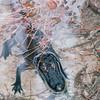Young Alligator - Okefenokee Swamp National Wildlife Refuge - Waycross, GA  11-28-97