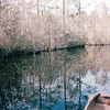 Beautiful Water Reflections - Okefenokee Swamp National Wildlife Refuge - Waycross, GA  11-28-97