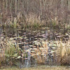 Pond - Savannah River National Wildlife Refuge