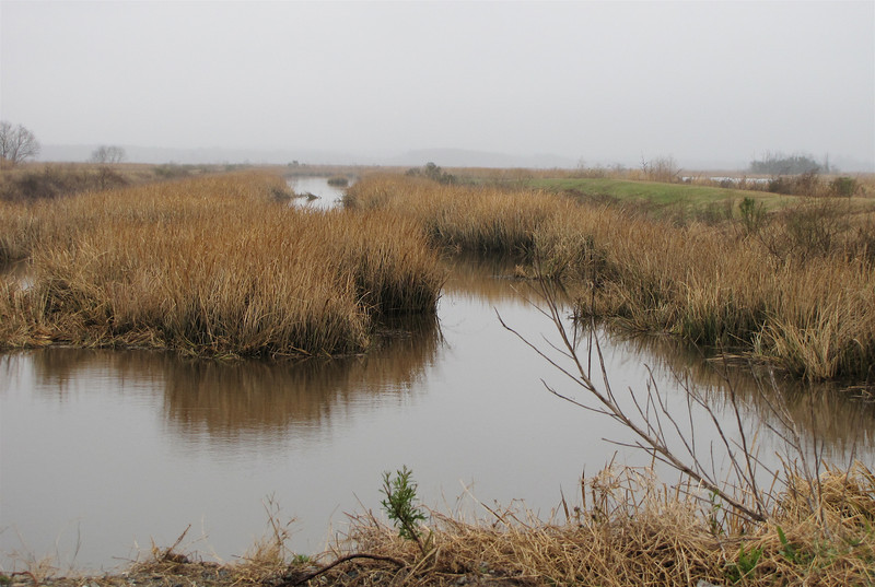 Wetlands at Savannah River National Wildlife Refuge