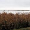 Large Expanses of Water at Savannah River National Wildlife Refuge