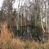 Wetland Trees - Savannah River National Wildlife Refuge