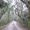 Part of the Four-Mile Drive Around the Refuge - Savannah River National Wildlife Refuge