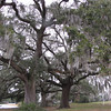 Live Oaks and Spanish Moss - Savannah River National Wildlife Refuge